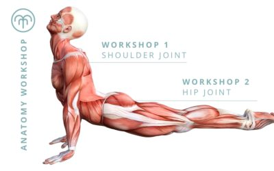 Fundamentals of Anatomy – Shoulder Joint