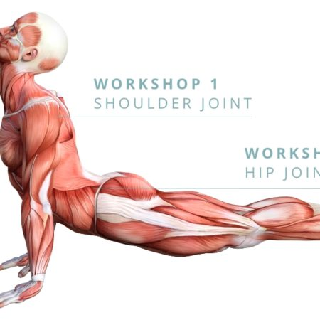Fundamentals of Anatomy Workshop – the Knee Joint