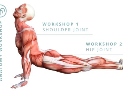 Fundamentals of Anatomy – Hip Joint