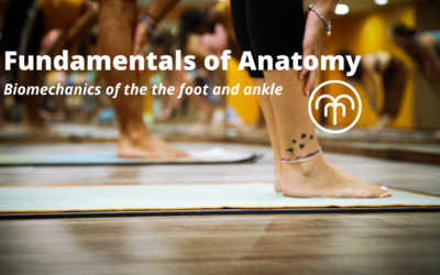 Fundamentals of Anatomy – Foot and Ankle biomechanics